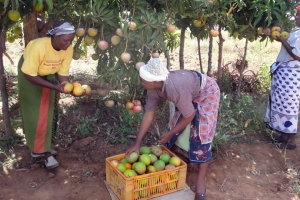 Passion and Mango Market Access Development (PAMA) Programme