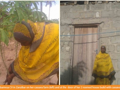 Cassava farming improves the living standards of farmers in Zanzibar