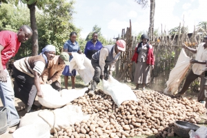 Enhanced Market Access for Irish Potatoes