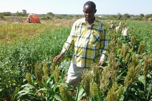 Somalia Rural Commercialization and Markets