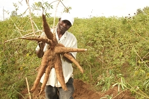 KENYA & TANZANIA | Cassava Village Processing Initiative