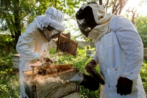 Farmers realize income worth USD 21,010.9 from Honey Farming in three months