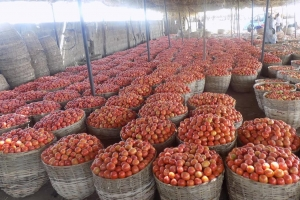 AFRICA   Agri-Market Service Centres Sustainability Programme