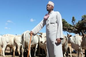 Livestock Marketing for Northern Kenya
