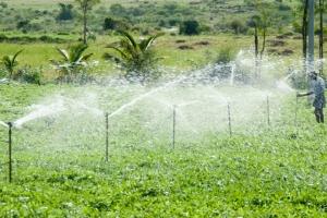 KENYA | Cooperative Agri-business Sustainability Approach- Nyalani irrigation scheme